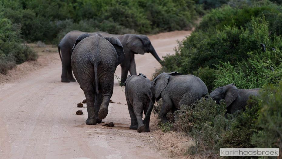 karinhaasbroek.com_Addo Elephant Park-1