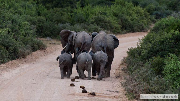 karinhaasbroek.com_Addo Elephant Park-2