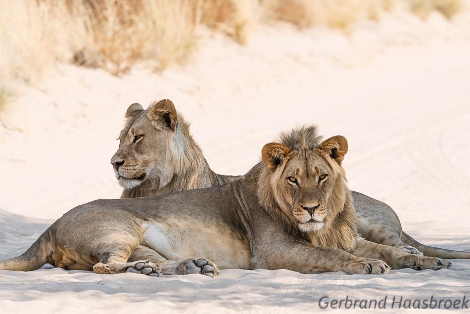 karinhaasbroek.com_Gerbrand en Karin Kgalagadi 2015_BLOG-3