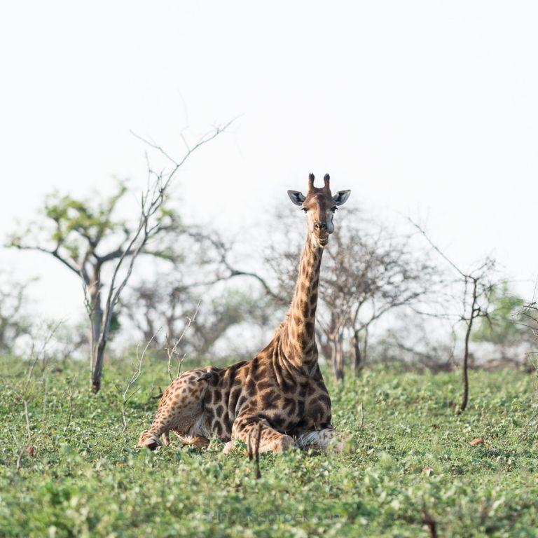 4_karinhaasbroek-com_african-wildlife_kwazulu-natal__dsc0179